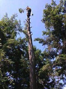 Lumbersmith Tree Removal Services Inc  Cambridge Kitchener Area image 8