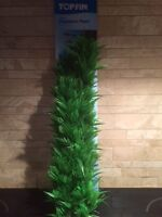6 TWO MONTH OLD TOP FIN 20 INCHES HEIGH PLASTIC BALL PLANTS
