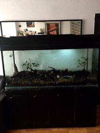 fish tank terrarium 1,65 x 86 x56 cm