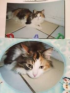 Has anyone seen this Calico?