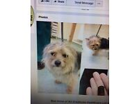Lovely Little Yorkshire Terrier wants to reunite with owner