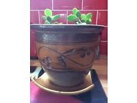 Money Plants, Terracotta and Gold Tray £7