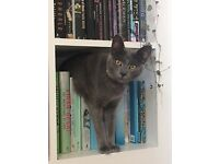 Missing - grey female cat