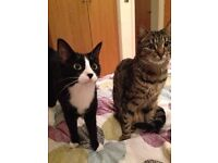Adult cats for rehoming