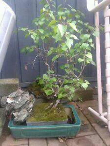 Bonsai  and other Plants