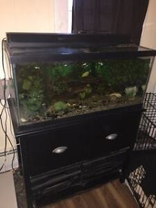 40gal tank and fish for sell