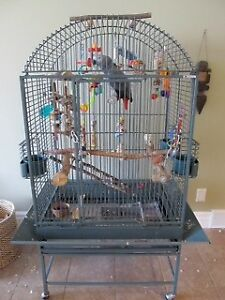 Parrot Bird Cage for Sale - Parrot NOT for Sale