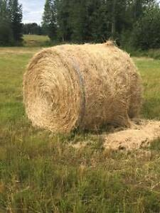 Hay for Sale - Round Bales for Horses