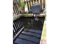 Pond for sale