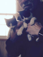 Three cute rescue kittens need good homes