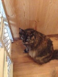 URGENT - CAT TO REHOME to FARM/ACREAGE!