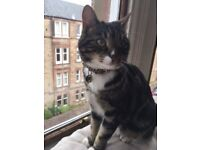 MISSING CAT: PLEASE HELP! 3yr old tabby with white paws missing from Gilmerton area of Edinburgh