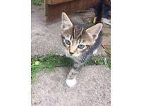 2 Kittens for sale - 1 Male, 1 Female