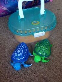 live pets turtles