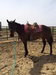 7 year old quarter Horse