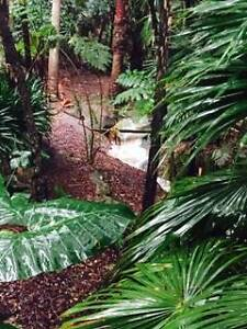 Beautiful Studio in your own rainforest Newport Pittwater Area Preview