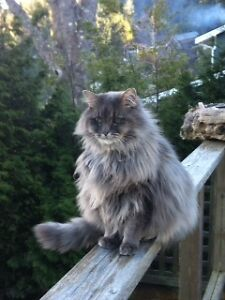 Female cat lost near Venables & Madison in Burnaby