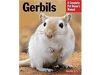 gerbil looking for new home as cage