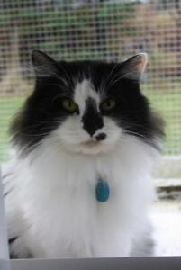 Loving cats for adoption from a Cage-free rescue group