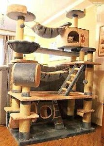 Looking for a Cat tree/climber London Ontario image 4