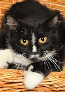 "Young Female Cat: ""Macie"""