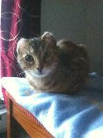 "Young Female Cat - Tortoiseshell-Tabby: ""Zooky"""