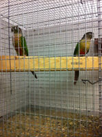 Proven pairs of CONURES (NOT TAME)