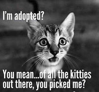 ~ADOPT~ and save the life of an ABANDONNED animal