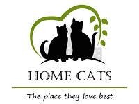 Exclusive Home Cat Sitting Service, Over 30 Years Experience in Cat Welfare, References Available