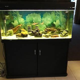 Aquarium  $150 for 248 Litres 47 inches X 19 inches X 17.5 inches