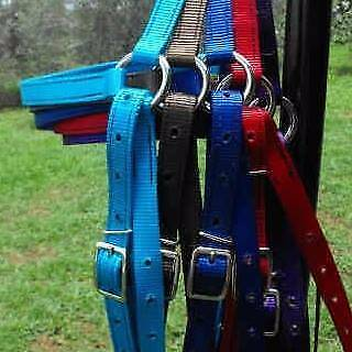 Coloured Horse gear