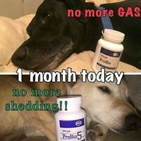 Plexus for your Dog