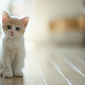 I want an orange or pure white kitten!