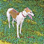 The Spotted Hound