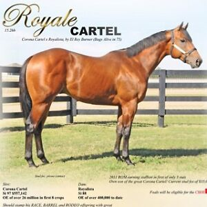 2011 OWN SON OF CORONA CARTEL AT STUD! SUPER STAKES AND CBHI