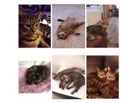 Need a forever loving home , two female cats