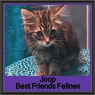 Joop - Best Friends Felines