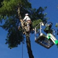 Chanter Services Tree Service
