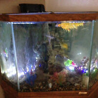 CORNER FISH TANK 36 GALLON EVERYTHING AND FISH INCL