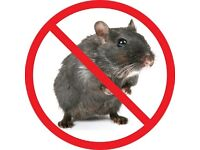 Poison free rodent control Proofing work