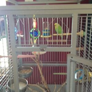 Male Budgie with 2 Cages & all accessories Kawartha Lakes Peterborough Area image 6