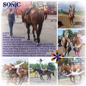 Sonic. Trick Riding horse for sale