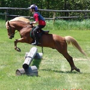 Amazing Welsh/POA pony for sale