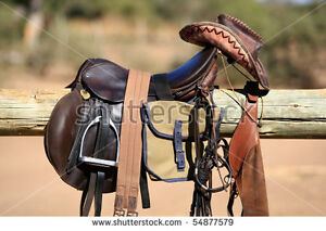 Looking for a horse to lease