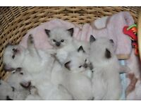 beautiful kittens free to a loving home