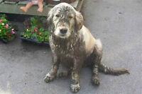 Need a bath? Nail Clip? Codiac Pet Supply!