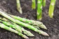 New varieties Heirloom/NON-GMO seeds- Asparagus, Cabbage, etc.