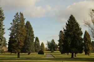 OCEAN VIEW CEMETERY - Many Choices (Single and Side-by-Side)
