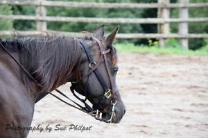 Beautiful Polish Arab Mare  new price for quick sale!