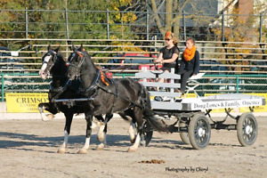 Show wagon for sale